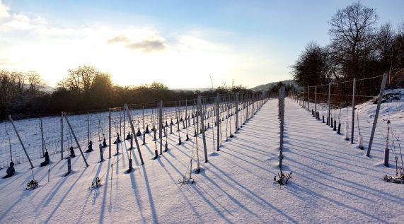 Historische Weinprobe im Remisenkeller