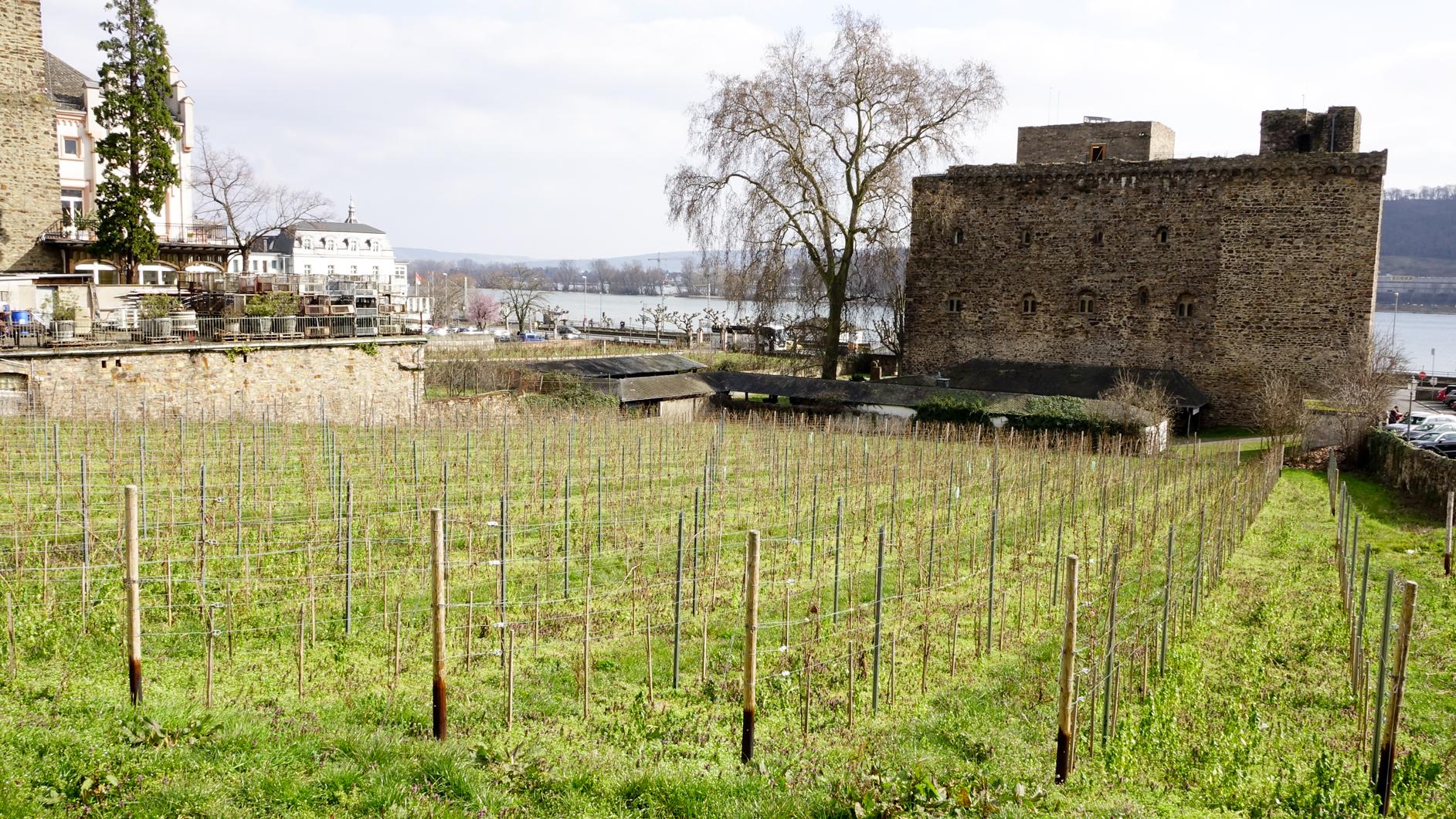 2016-03-Rüdesheim-177